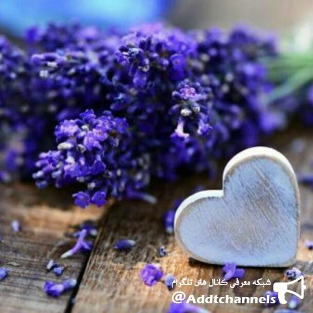 کانال Purple Love