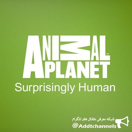 کانال AnimalPlanet