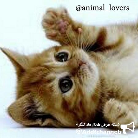 کانال animal_lovers