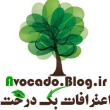کانال آووکادو