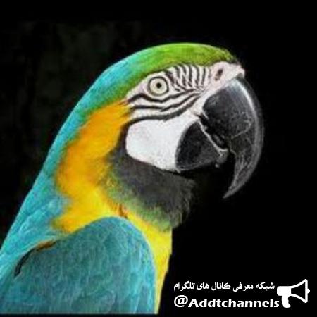 کانال دایره المعارف طوطیها