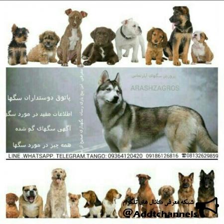 کانال پاتوق دوستداران سگ ها