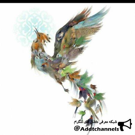 کانال بازارچه پرندگان و حیوانات سیمرغ