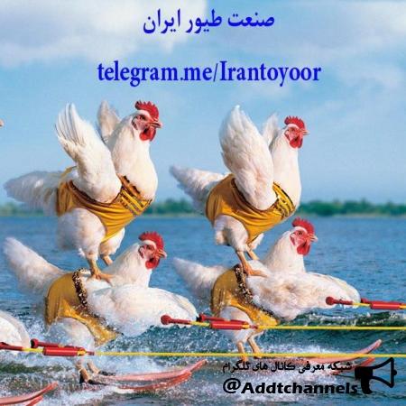 کانال صنعت طیور ایران