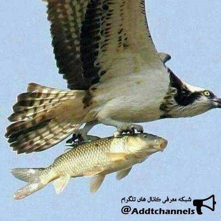 کانال ماهیگیران و شکارچیان