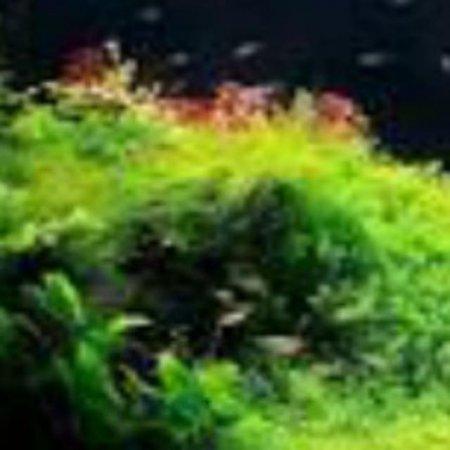کانال Plantaquariumkerman