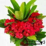 کانال تلگرام پرورش گل و گیاهان آپارتمانی