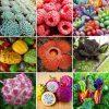کانال تلگرام فروشگاه گل و گیاه