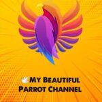 کانال تلگرام طوطی زیبای من